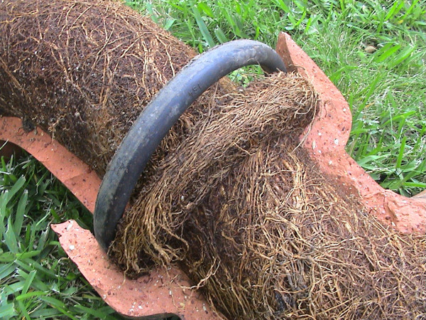 Pipe filled with roots